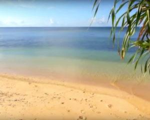 島(八重山)の風景と、守音-Shuto-演奏の三線(サンシン)映像と音のコラボ